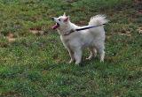 Tilki in her new park
