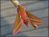 Moths - Sweden