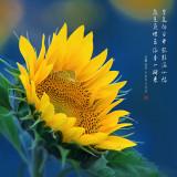 lanhua_pps