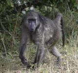 Kruger Day Trip