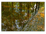 Reflection in a small stream
