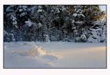 Winter light  5