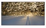 Winter light  # 7