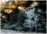 Winter-light 2