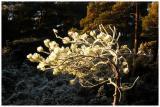 Winter-light 3