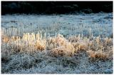 Winter-light 5