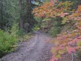 Fall Colors Along Road Closure