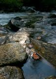 Fall Leaf On Bridge Creek