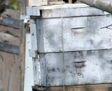 Bee Hives in Cherry Orchard