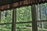 Dogwood From Inside Old Log School House