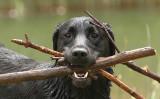Bertie 3 sticks headshot.jpg