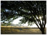 California Reststop Sunset