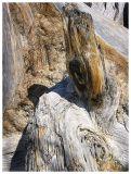 Utah tree stump