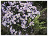 wildflowers near Mt Elbert