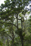 Rainforest at Cunninghams Gap