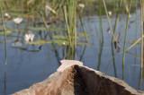 Mokoro or dugout canoe