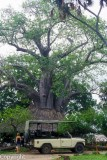 Mbuyu Camp
