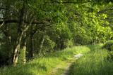 Forest park, Guitiriz (Lugo), Galicia