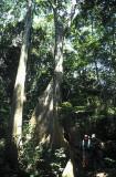 Hiking through rainforest, Cuc Phuong NP