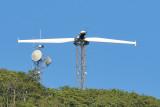 Wind Turbine Test - Nikon 80-200 @ 200mm.JPG