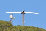 Wind Turbine Test - Sigma 18-200 @ 200mm.JPG