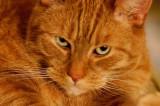 Pets - Mine, Friends', Relatives', Acquaintences'