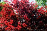 Providence RI-20080525_50_Naragansett Rivr_DxO2_RAW.JPG