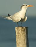 Seabird 1