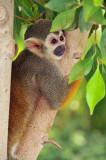 Monkey 4