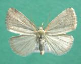 931291 (9048) Protodeltote albidula