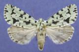 931494 (9281) Agriopodes fallax