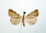 930490 (8341) Zanclognatha theralis