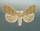 9555 Ipimorpha pleonectusa