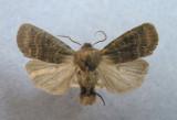 9881 Homoglaea hircina