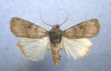 Saskachewan Lepidoptera in MNT Collection