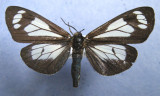 Alberta Lepidoptera in MNT Collection