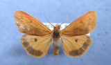 Lepidoptera Of Nova Scotia in MNT Collection