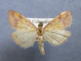 British Columbia Papillons - Moths & Butterflies