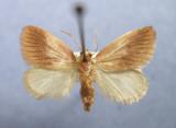 Zygaenoidea - 4618 to 4702