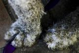 May 23rd - Dirty Feet