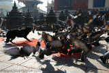 Nepal 4407.jpg