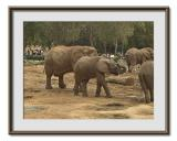 Safari  Ramat  Gan 14.jpg