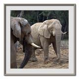 Safari  Ramat  Gan 13.jpg