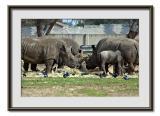 Safari  Ramat  Gan 8.jpg