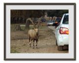 Safari  Ramat  Gan 4.jpg