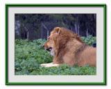 Safari  Ramat  Gan 2.jpg