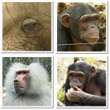 Close-up safari.jpg