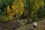 Mt Sheep