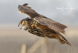 Workshop photography birds of prey