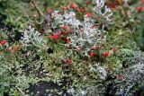 IMG_4620 assemblage automnal - lichens